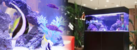 海水魚水槽120cm