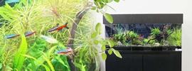 淡水魚水槽120cm