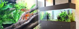 淡水魚水槽150cm