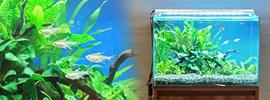 淡水魚水槽45cm