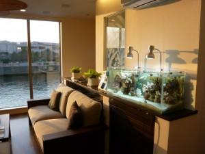 海を感じ、室内でサンゴを育てています