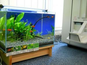 オフィスに「水槽」を設置する事できっと運気も上がります