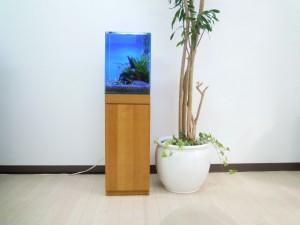 水槽と観葉植物で自然感を表現しています