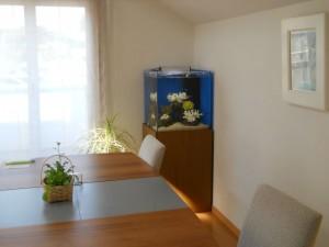 水槽台を少し高くする事で空間を水槽が飾ります