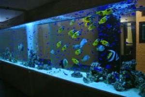 8mの大型水槽には800匹を超える豊かな海が広がります。
