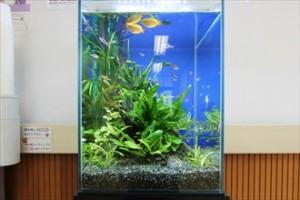 クリニックの待合室に設置した癒しの水草水槽