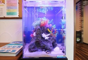 カラフルな熱帯魚が癒しを運びます