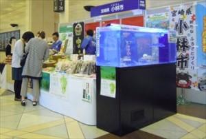 短期イベントにチョウザメ展示水槽!