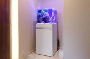 華やかなキューブ水槽を設置
