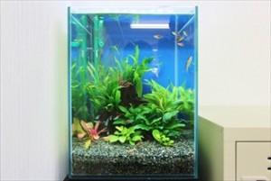 水草と熱帯魚が癒しを運びます!