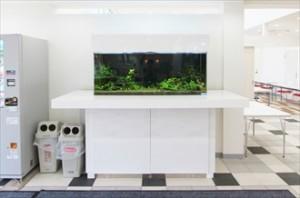 住宅展示場に癒しの大型水槽が登場しました
