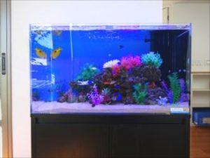 岡崎市 薬局様 南洋の魚たちが岩山を泳ぐ水槽!