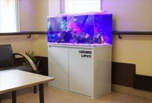 宍粟市 福祉施設に色鮮やかな90㎝海水水槽