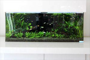 住宅展示場に短期レンタル150cm淡水魚水槽