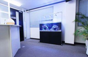企業受付に癒しの120cm海水魚水槽を設置