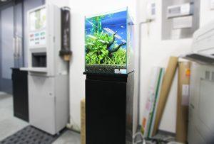 オフィスに清涼感のある淡水魚水槽を設置